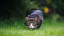 Картинка кошка. трава, кот, котенок, крадется, sneaks, JPEG.