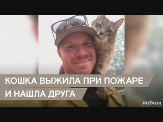 Кошка выжила при пожаре в Калифорнии и нашла нового друга