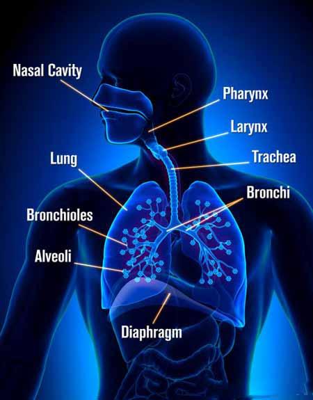 Респираторные вирусы вызывают инфекции в легких или других частях дыхательной системы.Респираторные вирусы ➤