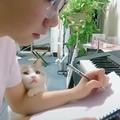 Хорошо когда есть кто-то, кто смотрит на тебя так как этот котейка ))))