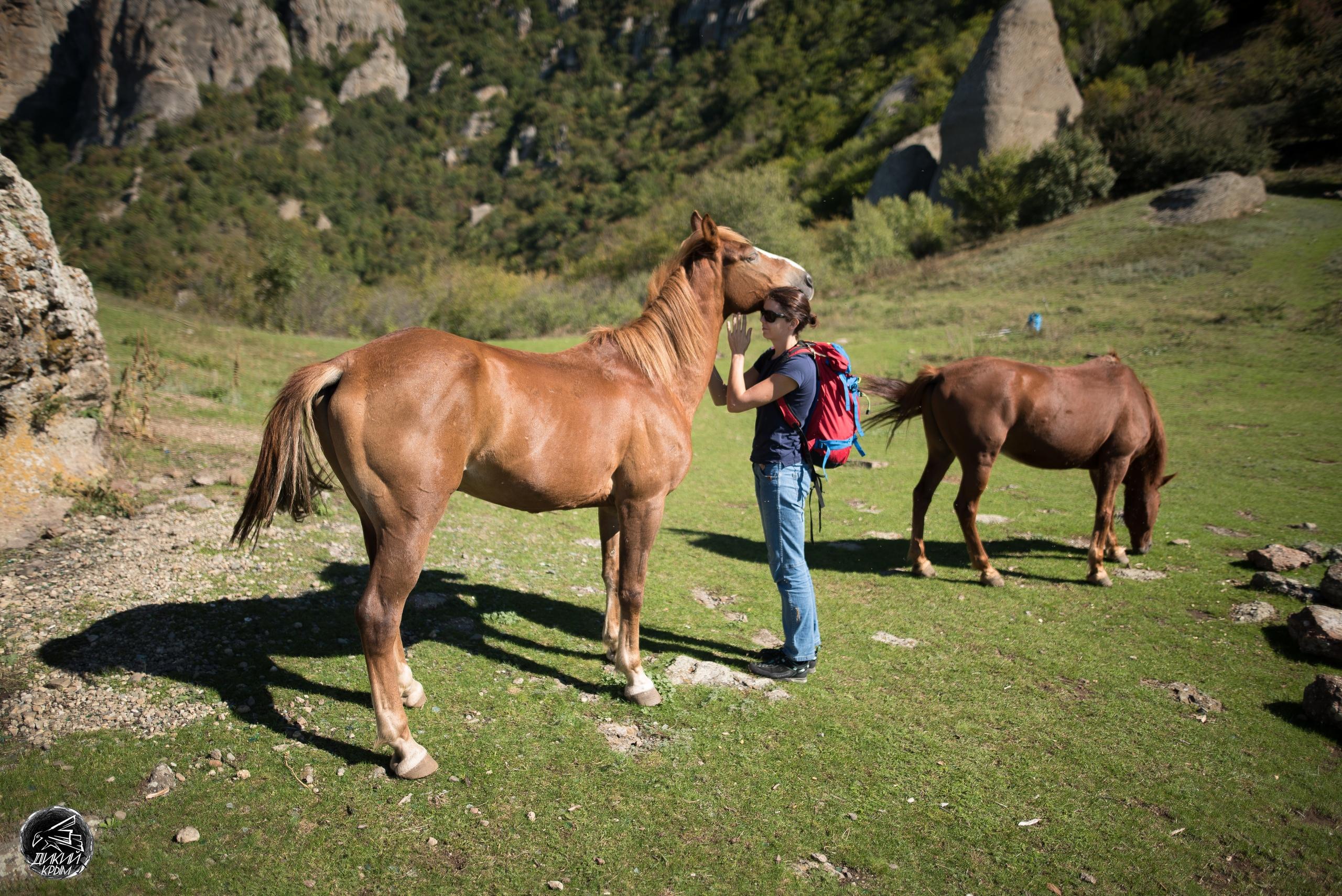Лошади на Демерджи