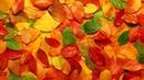 Разведение червей в огороде Вермикомпостер своими руками Осень первые заморозки