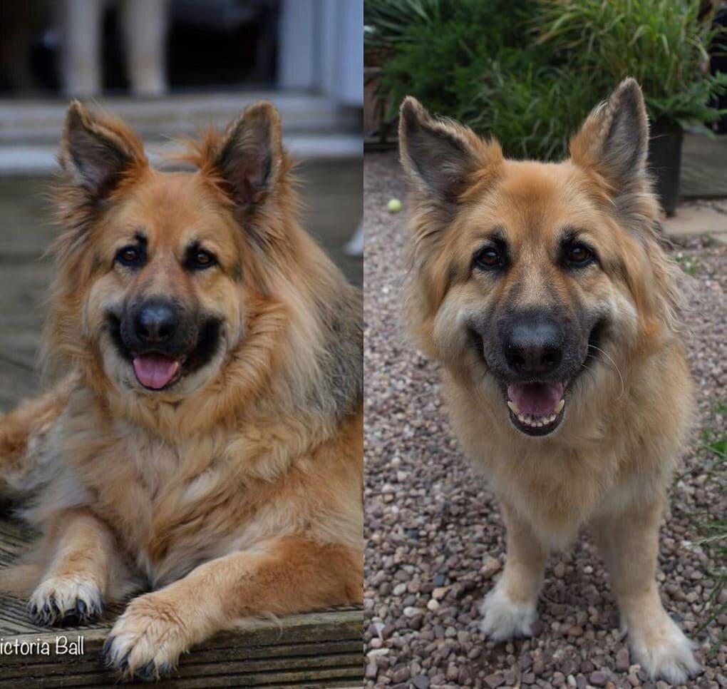 l QOUE75Q9w - Собачьи истории похудения: лето все ближе