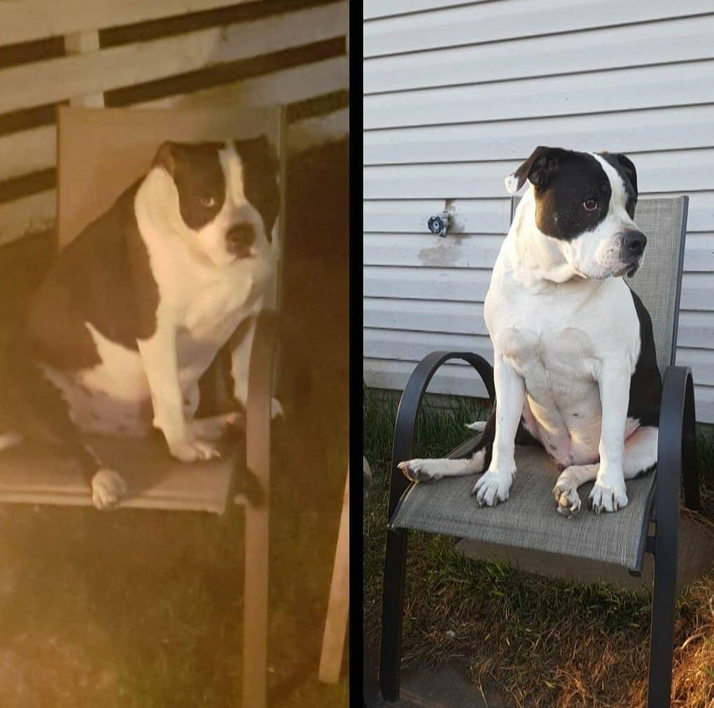 9o5MpuRqArg - Собачьи истории похудения: лето все ближе