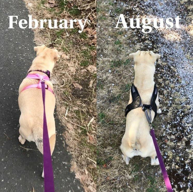 GRvdF9lvl9A - Собачьи истории похудения: лето все ближе