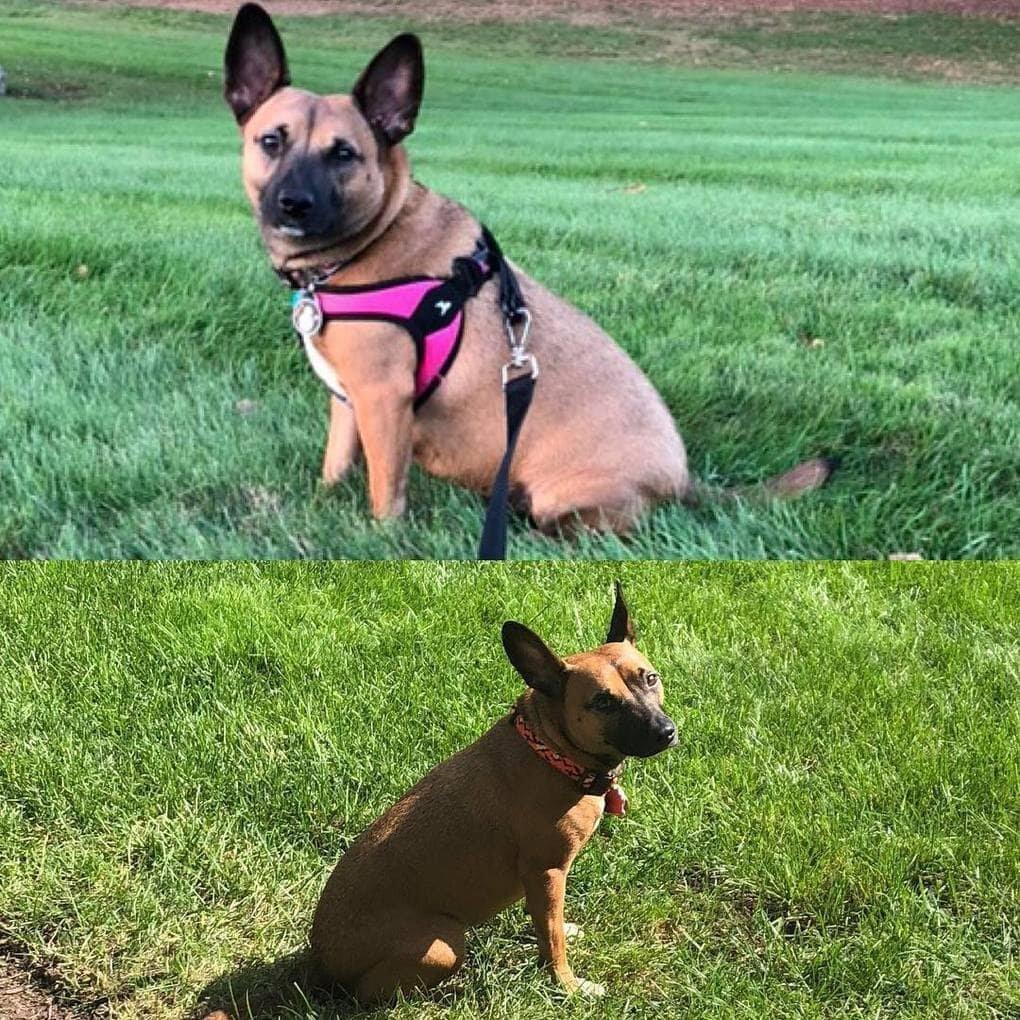aThRIHXpsAg - Собачьи истории похудения: лето все ближе