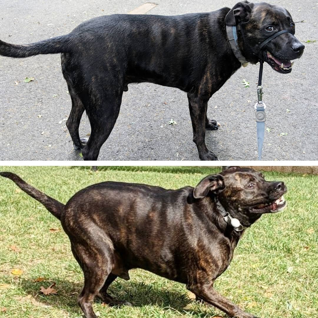 IcfP5 jVnec - Собачьи истории похудения: лето все ближе