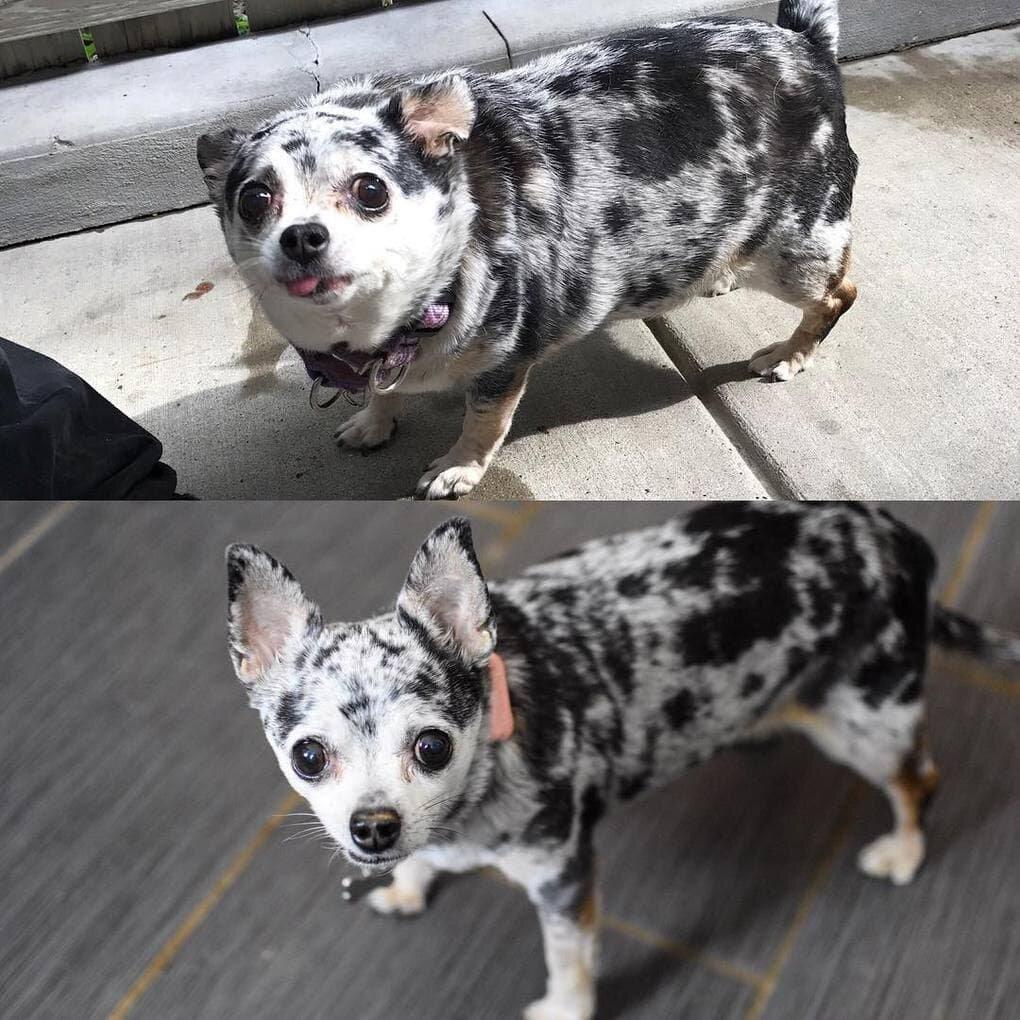 x6aLhh81Wws - Собачьи истории похудения: лето все ближе