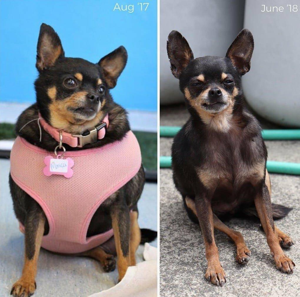 qRSM TjNeiQ - Собачьи истории похудения: лето все ближе