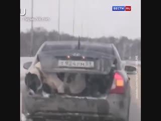 Полиция проверяет ролик с выпрыгнувшим из багажника алабаем