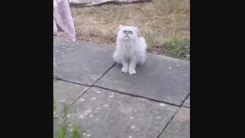 "Кот из Ада пришел домой к маме A crazy looking cat at his mom's house!"" 🐱😳😂"