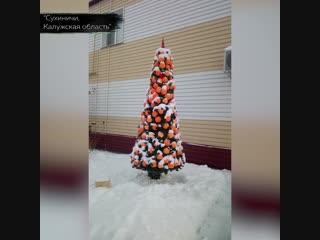 Чудовищный новогодний топ: елки, которые надо сжечь