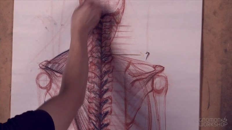The Gnomon Workshop Anatomy Workshop (Volume 5) 3. The Spine and Muscles of the Upper Back