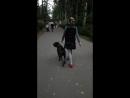 Шервуд и Лена. Прогулка в парке без поводка.