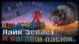 (О) Крысёнок ЛАЙК ЗЕВАЕТ! Наглый пасюк и поэзия, блин. _ (Fancy Rats Wild Rats)