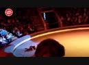 В новокузнецком цирке воздушная гимнастка сорвалась с высоты во время номера
