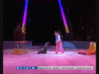 Главная елка региона прошла в нижегородском цирке