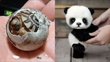 Cute baby animals Videos Compilation cute moment of the animals - Cutest Animals On Earth #7