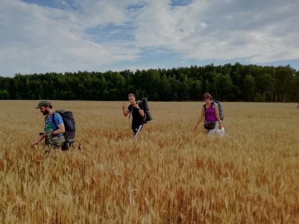 Идём через поле  ©Алексей Холмовский https://vk.com/id144276654