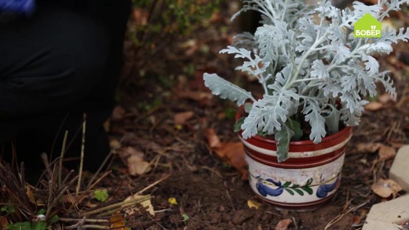 Берём растения из сада домой на зиму