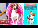 ТАЙНАЯ ЖИЗНЬ ДОМАШНИХ ЖИВОТНЫХ ГОВОРЯЩАЯ СОБАКА ДЖИНА Elli Di Собаки
