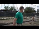 ТАКОГО НЕ БЫВАЕТ ! Человек вмешивается в драку львов ! Тайган