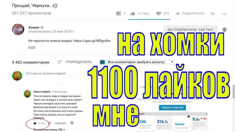 Подписчики Канала Хомки поставили мне 1100 лайков/Елена и зверята