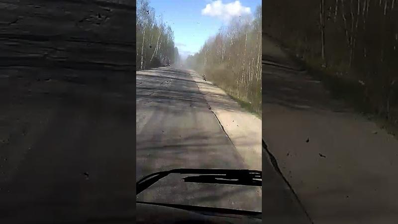 Дороги России дорога от трасы м 10 Ленинградского шоссе до Тихвина Ленинградской области