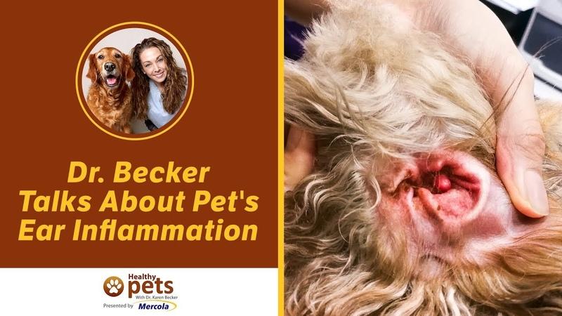 Отит у домашних животных / Pet's Ear Inflammation