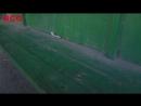 Главный по Ачинску грязная остановка и раскопки у Драмтеатра