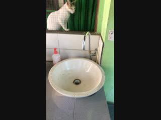 Приют Villa Kitty