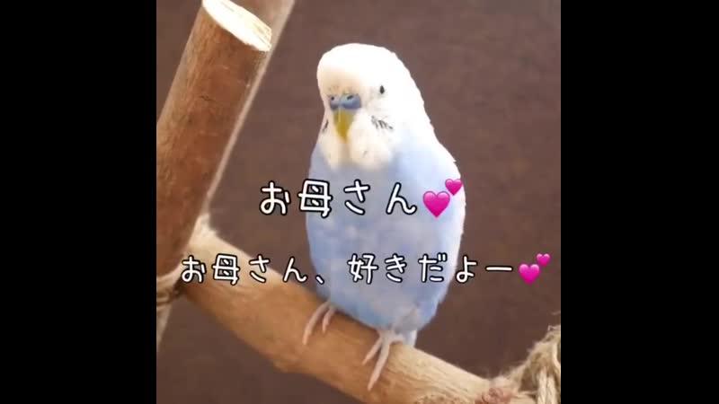 Попугай говорит по-японски