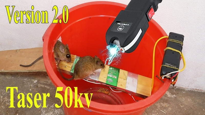 Electric Rat Trap V2.0 | The results of the 50.000 volts Taser Rat trap are Amazing House Mice