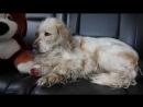 Счастливая история бездомного пса