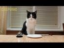 Waiter! Bring me food