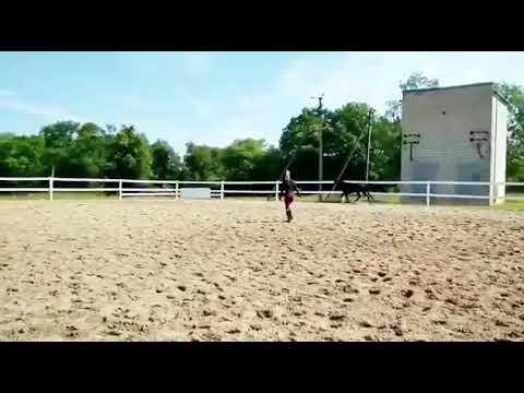 Минерва (видео от 27/06/18)