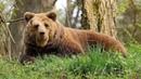 Живой или мертвый Медвежий лес