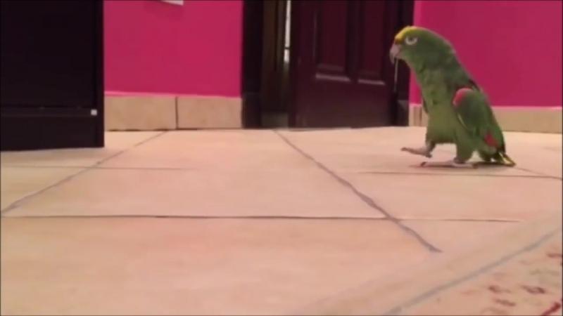 Bird MEMES 2018 - Funny Bird Compilation