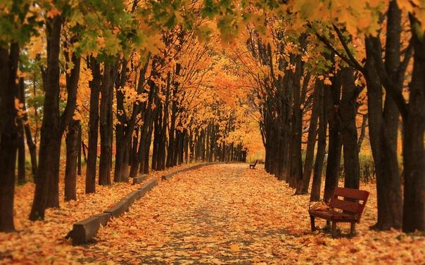 Безвозвратность будущего Артур идёт по парку. Он бесстрашно устремляется в самую гущу осенней листвы на дальних тропинках и с какой-то детской непосредственностью пинает сочные оранжевые листья.