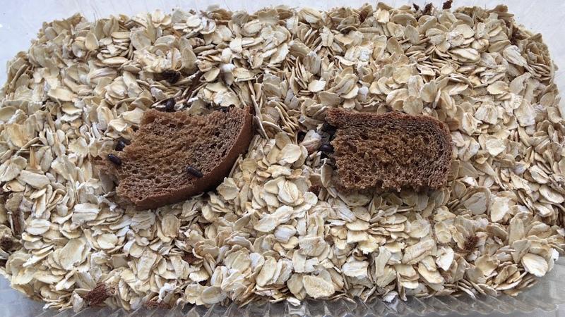 Бесконечный корм жуки знахари уход и главные ошибки содержания TRY HARD МАТРИАРХАТ