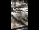 Геленджик, Сафари парк