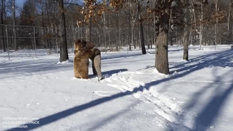 Couple of winter chonks are happy to see Jim