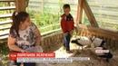 Жінка з села Ядути врятувала лелеченят яких придавило власне гніздо