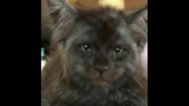это я, Лёха, помоги выбраться из кота
