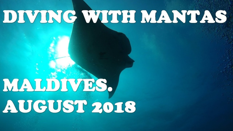 Diving with Mantas. Maldives. August 2018