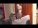 So lustig Tanzende Papageien