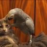 блатной попугай