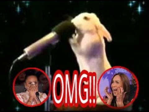Top 5 best auditions animals, America's Got talent 2017