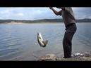 Ловим Рыбу на Снасть Убийца Судака Рыбалка на ЖИВЦА Спиннинг и Микроджиг на Щуку и Окуня
