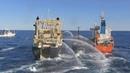 Япония выходит из китобойной комиссии и возобновляет промысел